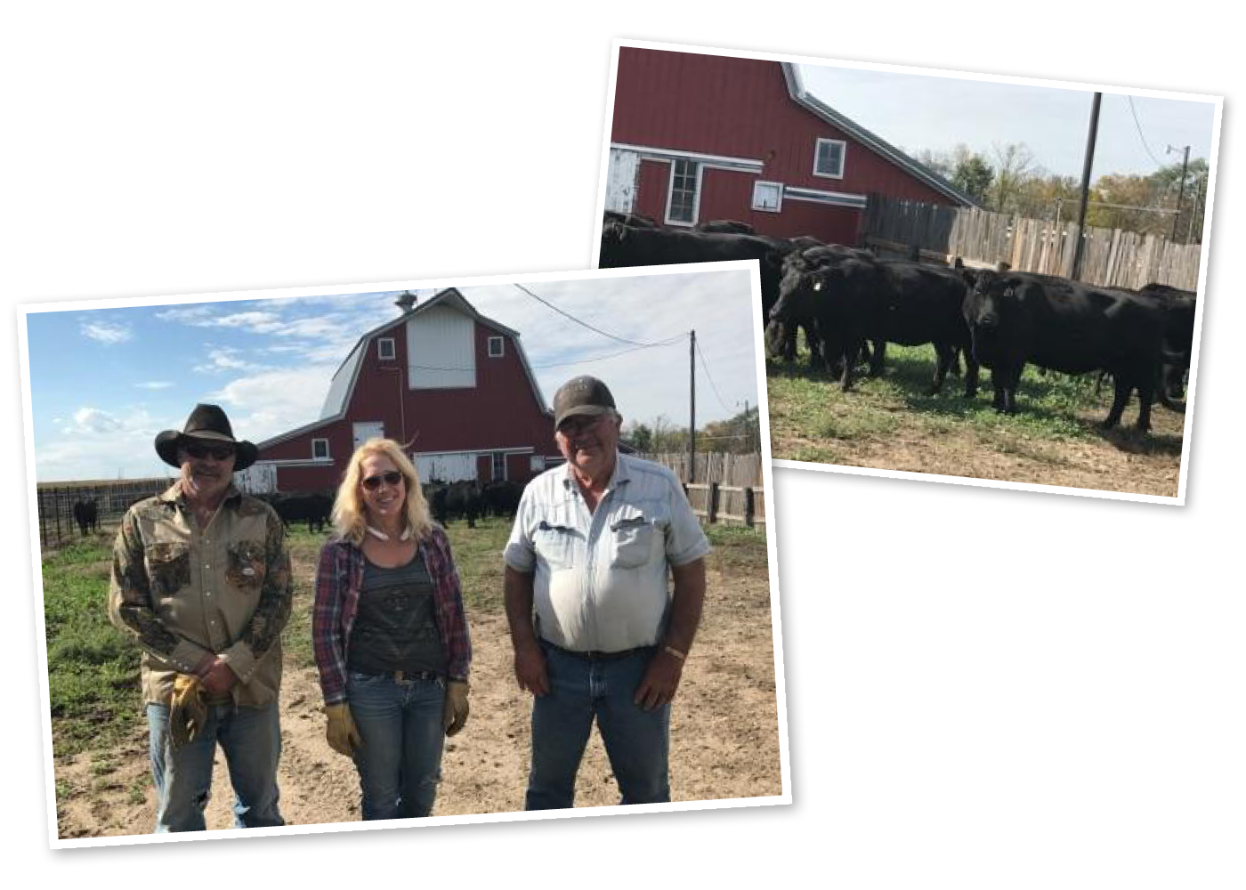Mark's neighbors, Greg and Marsha Krance helped transfer the cattle to Jim's farm