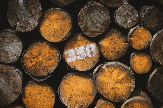 Wood logs cut for fire.