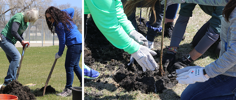 Choice volunteers planted hazelnut, oak, and chokecherry trees in Fargo's Madison Park.